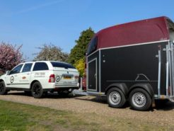 what-horse-trailer-can-my-ssangyong-tow-nwn